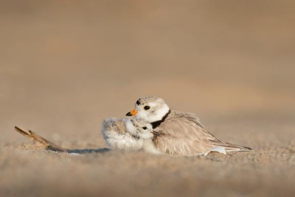 Bird and Baby.jpg