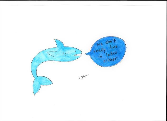 Shark #3
